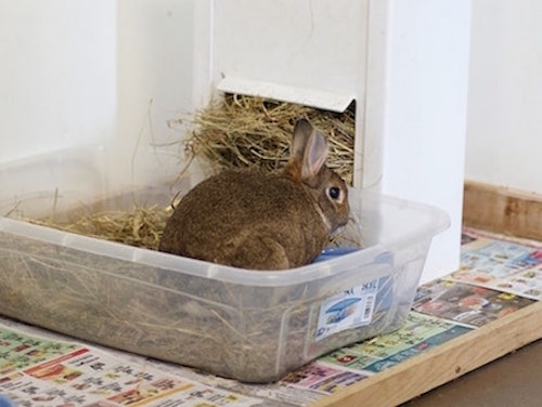 out of the box rabbits